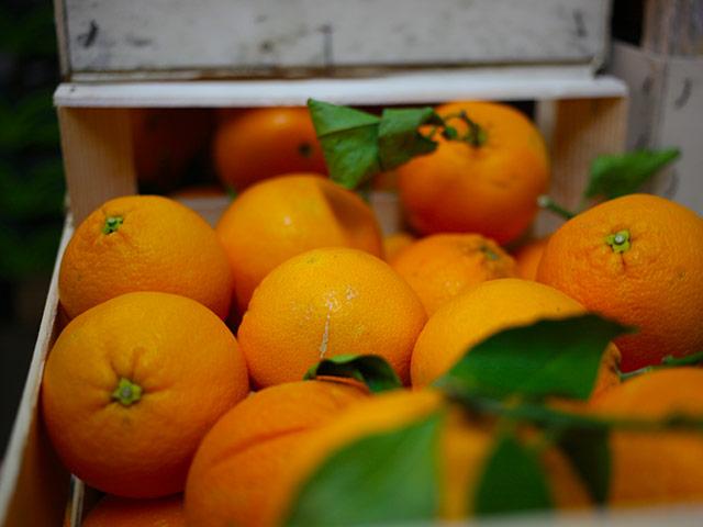 biofirat_stuttgart_demeter_orangen_2